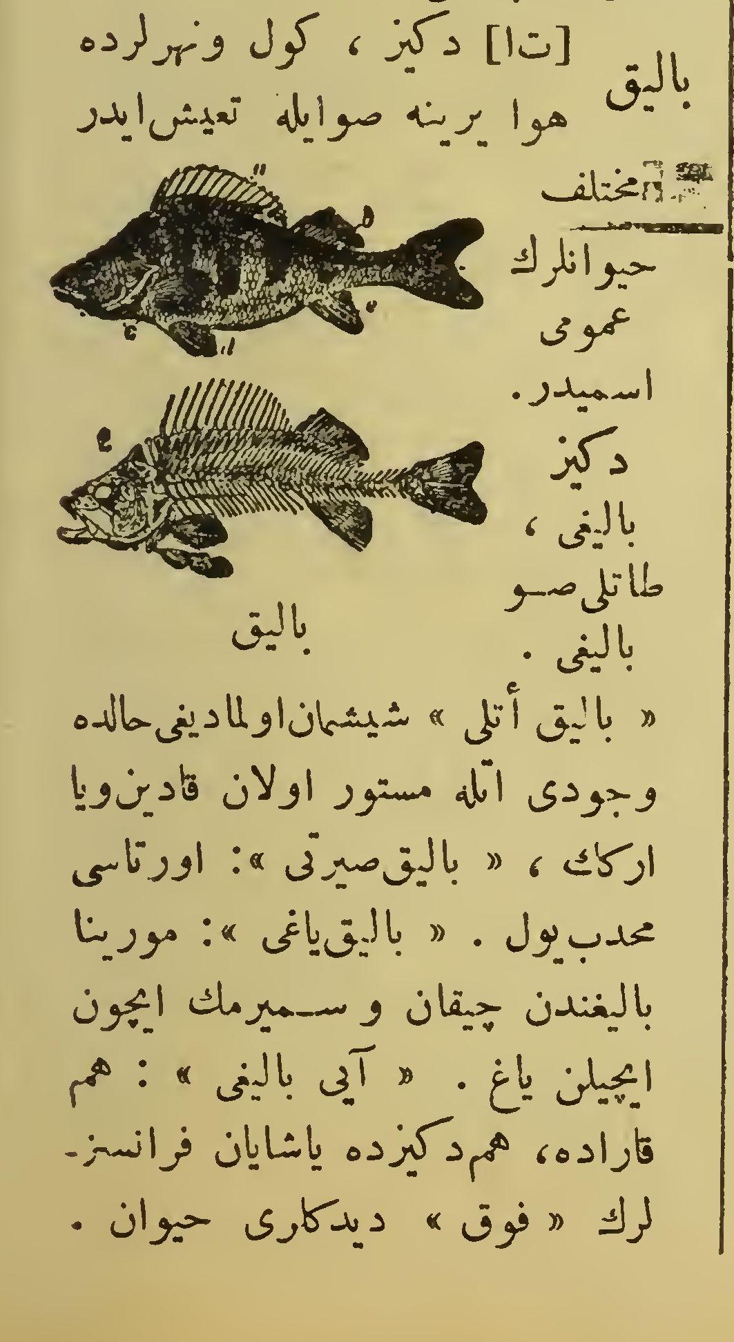 باليق - balık ingilizce ne demek, باليق anlami, what does it mean balık  باليق - Turkish Ottoman